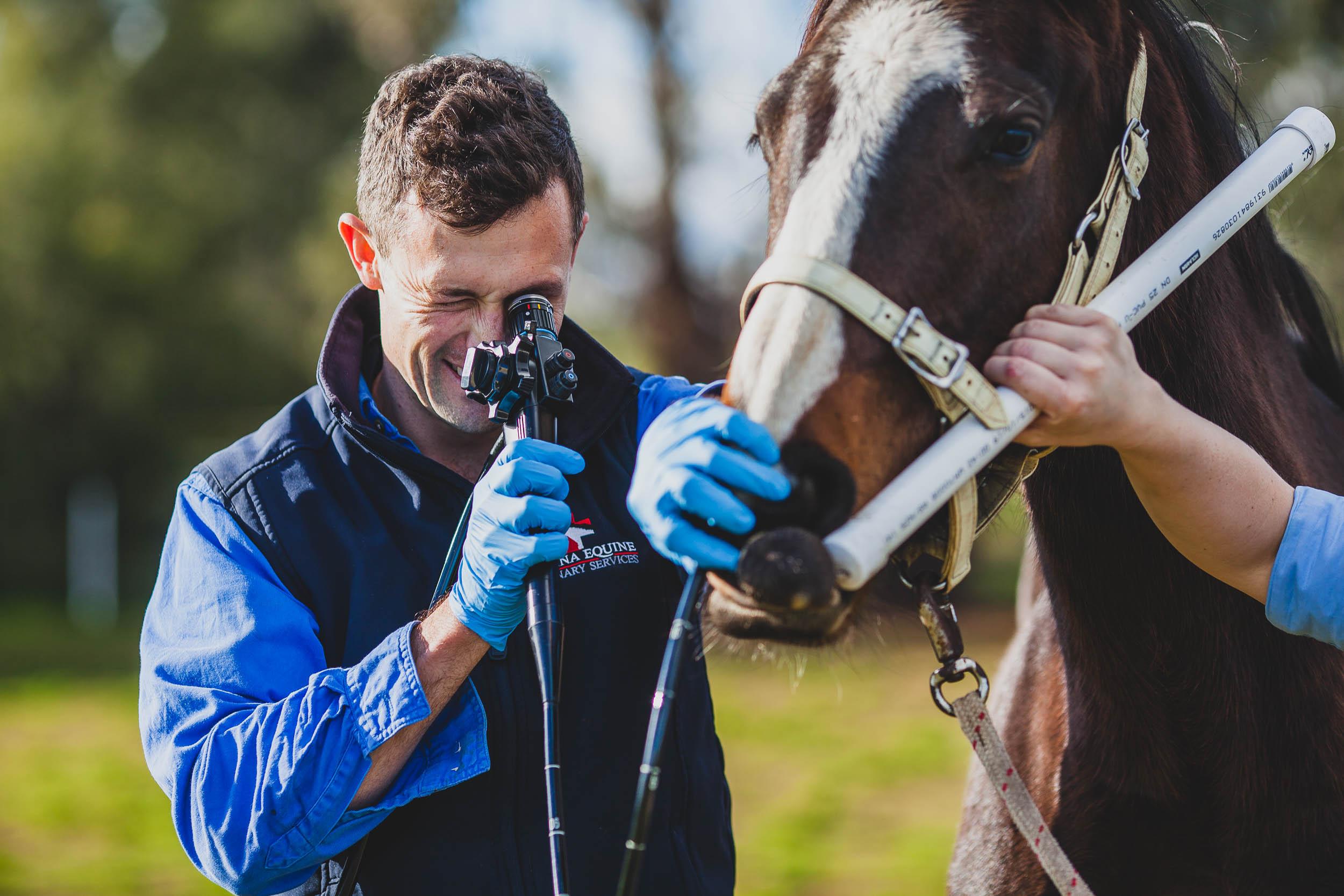 Dr Andy Lamont | Riverina Equine Vet